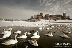 Wawel Castle - Landmark of Krakow  in a winter scenery