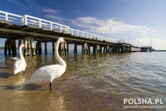 the pier in Sopot with swan